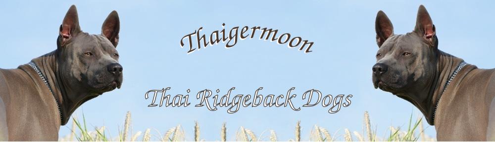 Thai Ridgeback Dog – Thaigermoon – Infos zum Thailand Ridgeback