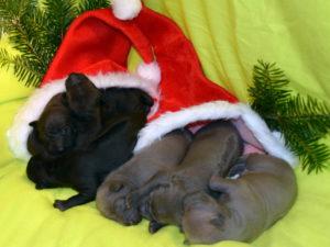 welpen_artit_christmas_1